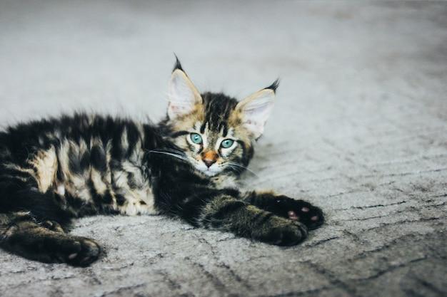 床に横たわって、カメラ目線の小さな灰色の縞模様の子猫