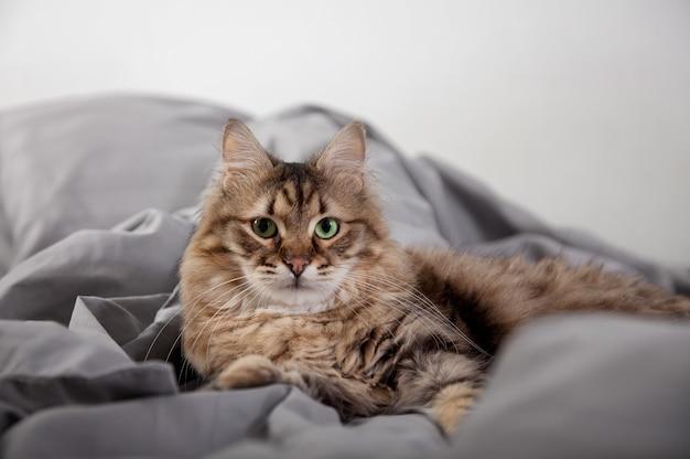 ベッドで横になっているかわいいふわふわ猫