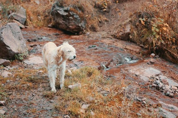 Горная собака-поводырь