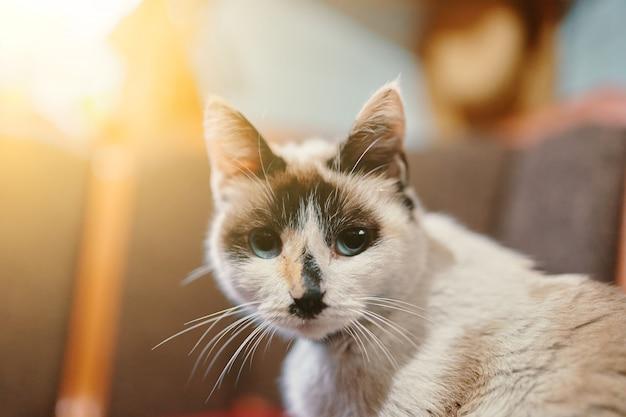 白と黒の猫。