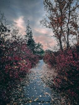 Длинная аллея с ярко-красными листьями