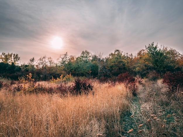 木々と曇った秋の風景。