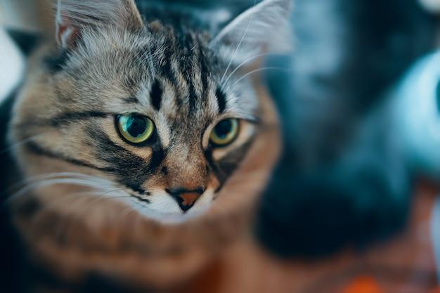 縞模様の猫の肖像画