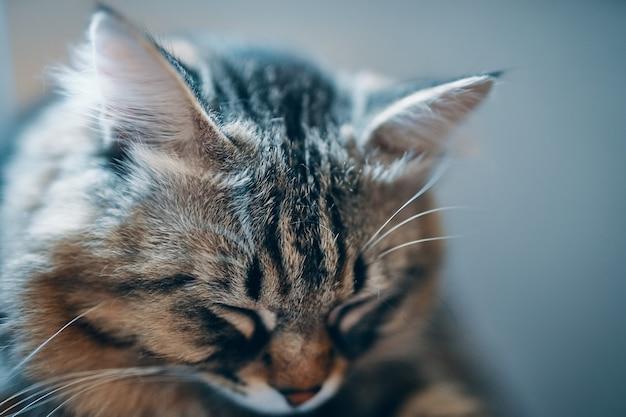 眠っている猫。
