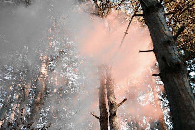 森の中の煙幕。