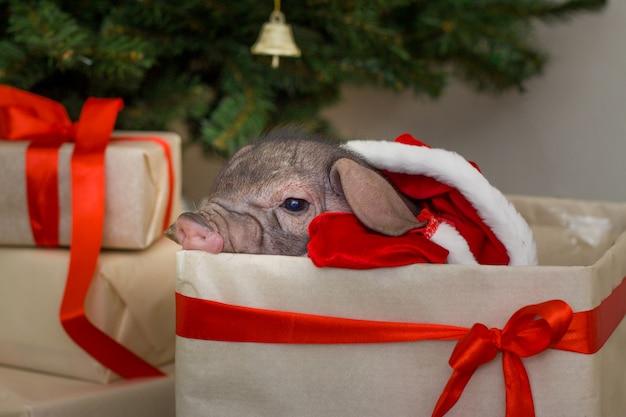 クリスマスと新年カード、ギフトのプレゼントボックスにかわいい新生児サンタの豚。