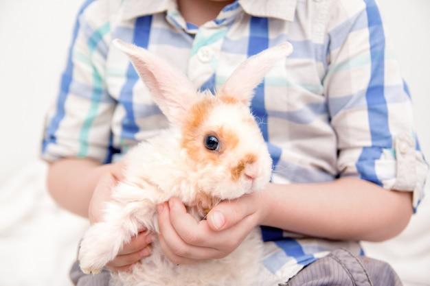 大きな耳を持つかわいいウサギ