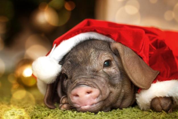 小さな豚とクリスマスと新年のカード。ピンクのサンタクロースコスチューム。