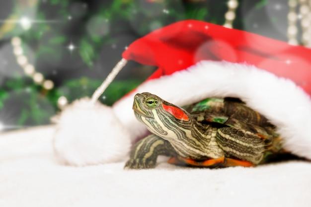 赤いサンタクロースの帽子のカメとクリスマスの創造的なカード。