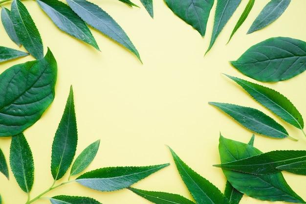 Рамка для текста из свежих зеленых листьев на желтом фоне.