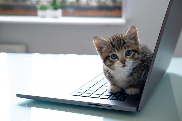 ノートパソコンのキーボードの上に座って、家の上面を見る小さな縞模様の子猫。