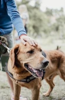 カニスドッグセラピー。ラブラドール犬と緑の芝生の上の障害児