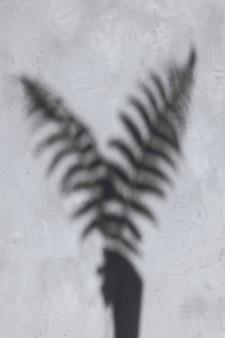 Тень листьев папоротника на цементной стене