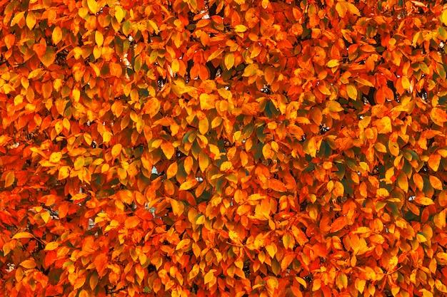 明るい赤とオレンジの秋の秋の葉の背景
