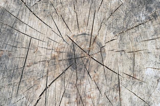 古いグレーの木の切り株のテクスチャの背景