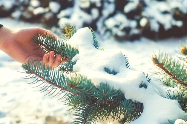 冬の森。春が来る。手は木の小枝に触れる