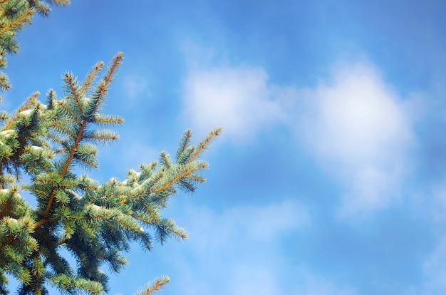 冬の森。春が来る。青い空に対するモミの木。明るい明日。