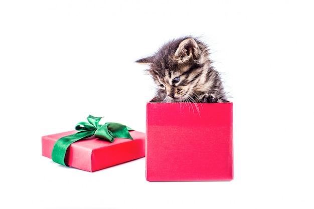 弓で赤いギフトボックスに少しぶち子猫