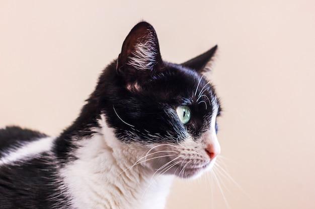 大きな緑色の目をした白黒の猫が目をそらします。