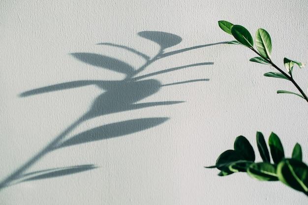 壁に灰色の背景の花の家の植物の影