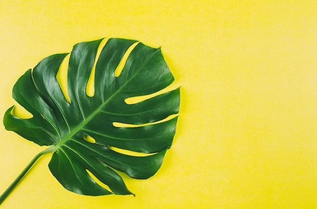 黄色い紙の背景に緑のモンステラの葉。上面図、コピースペース
