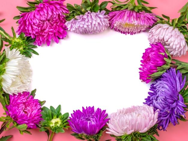 パステルピンク色の背景に美しいアスターの花。平置き。