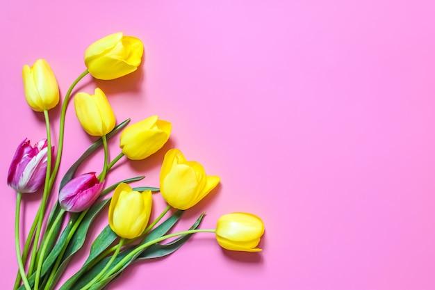 ピンクの背景に黄色と紫のチューリップ。春の時間。