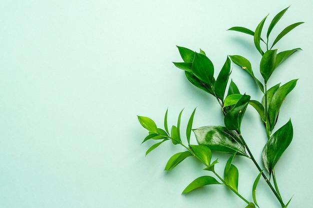 ミントグリーンの背景に緑の葉の小枝。テキストまたはオブジェクトを追加する場所。平置き