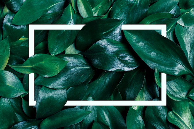 濃い緑の葉と白いフレームで作られた壁紙フレーム。