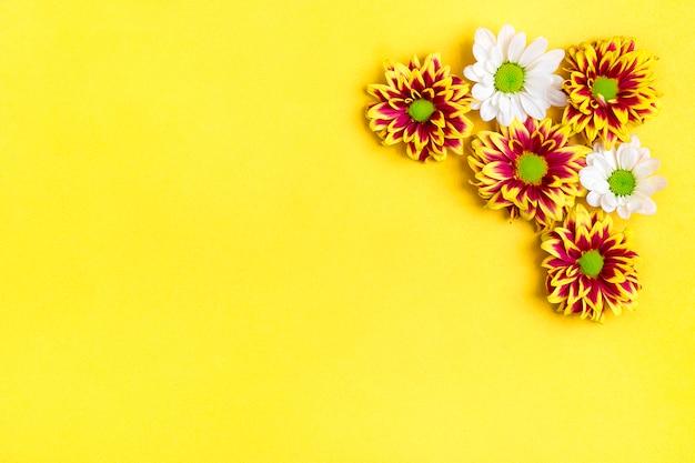 花の赤と白のアスターのパターン、黄色に分離された緑の葉
