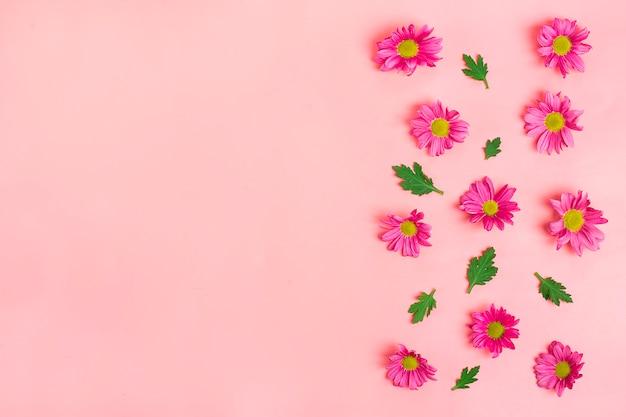 Узор из розовых цветов хризантемы, зеленые листья, изолированные на розовом