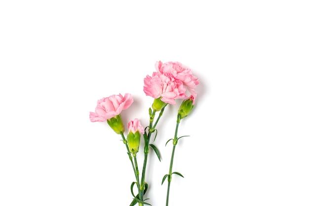 白い背景に分離されたピンクのカーネーションの花の花束