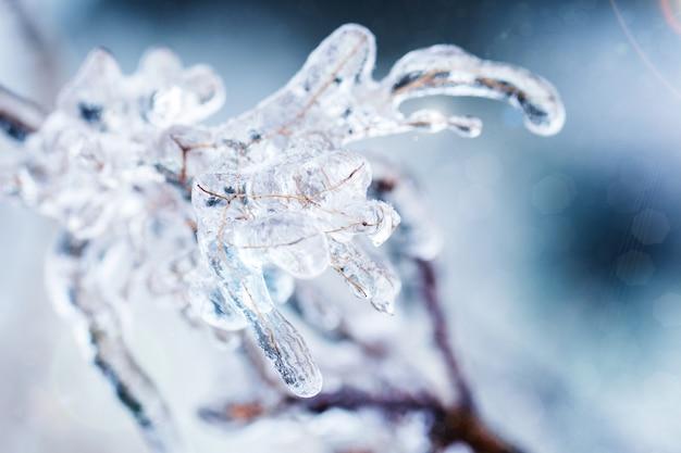 氷の冷凍枝