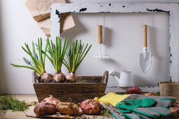園芸工具および球根