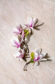 葉とモクレンの花