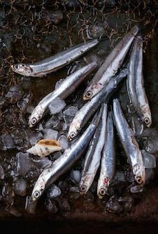 生の新鮮なアンチョビの魚