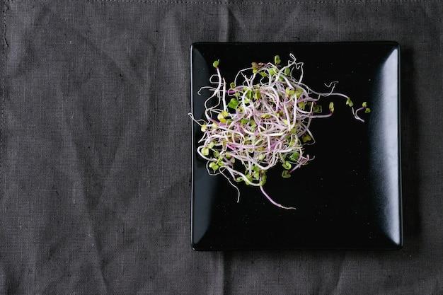 新鮮な大根の芽