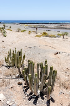 Традиционные методы производства морской соли в салинас-дель-кармен, фуэртевентура. производство из океанской воды