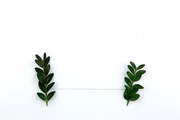 一枚の紙と葉と緑の小枝の上から見る。ヒーローイメージとコピースペース