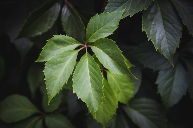 緑の葉のテクスチャ背景、自然の背景と壁紙