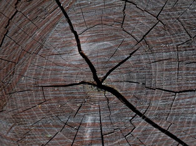 カット木の幹、年輪、クローズアップ背景テクスチャのウッドテクスチャ