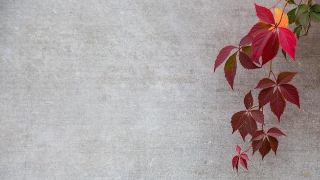 灰色の背景に秋または秋の葉。コピースペース