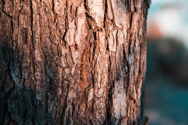 秋の森の古い樹皮を閉じます。