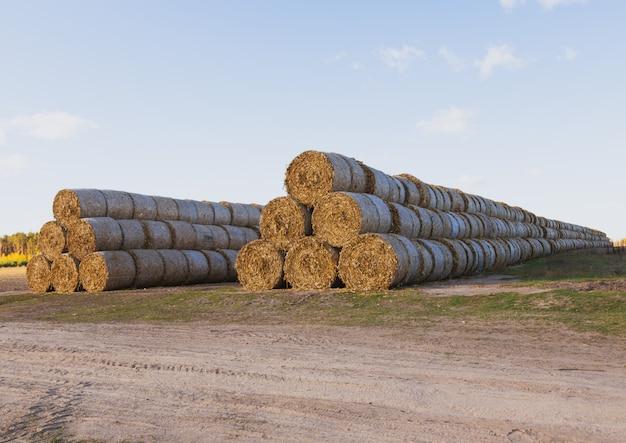 Огромная соломенная куча тюков сена на среди убранных полей на фоне голубого неба