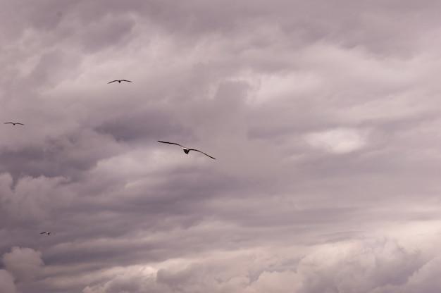荒れ模様の空に舞うカモメのグループのパノラマビュー。