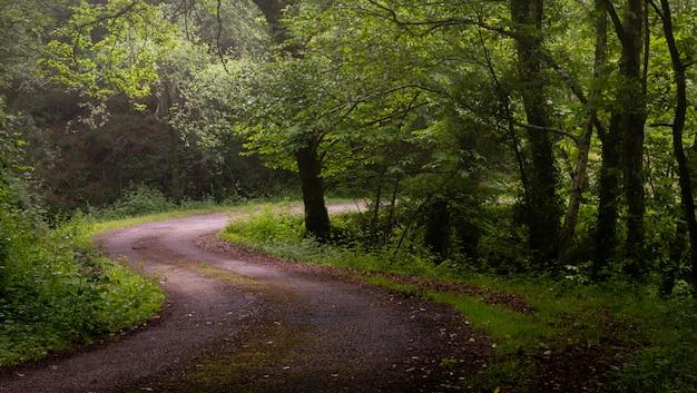 Извилистая дорога гравий грязи через солнечный зеленый лес, освещенный сквозь туман.