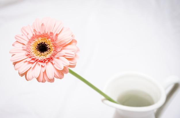 白い背景に対して花瓶に鮮やかなピンクのガーベラデイジーのマクロ写真