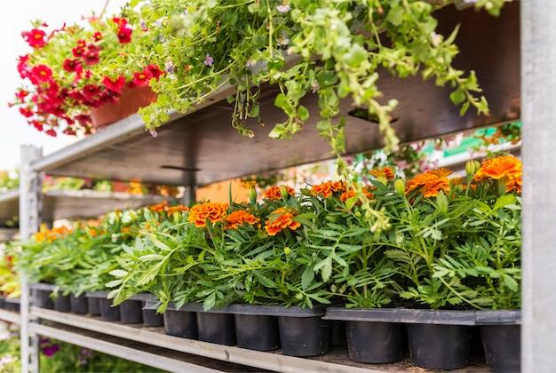販売のためのさまざまな庭の花が付いている棚。