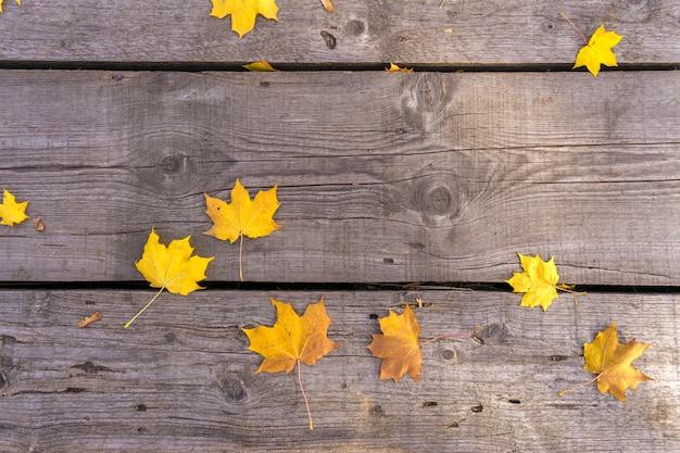 秋の黄色いメープルの葉は、古い塗装されていない木製の床に置かれています。