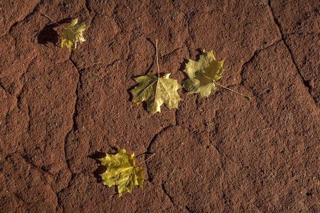秋の黄色いメープルの葉が赤い床の上に横たわっています